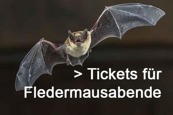 Tickets für Fledermusabende